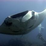 Phuket búvárkodás manta merülés